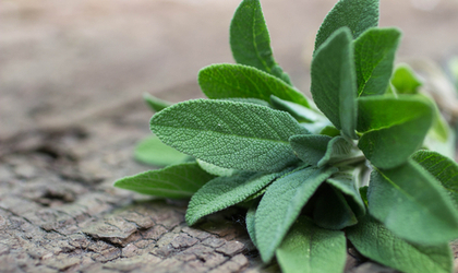 Herbs: Our Guide to Powerful Plant Health