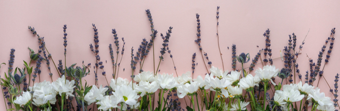 Lavender or Chamomile? Essential Oils for Sleep and Relaxation