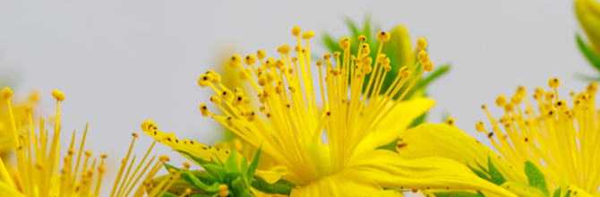 St John's Wort for Anxiety: How to Achieve a More Relaxing Sleep