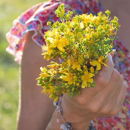 Navigating the menopause with St Johns wort