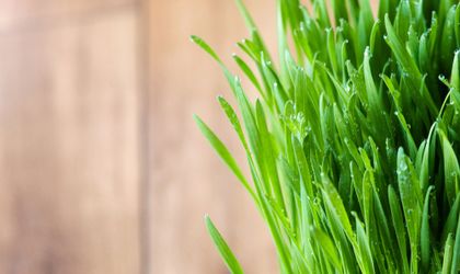 Why We Don't Sell Wheatgrass