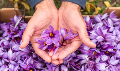 Why We Don't Sell Saffron