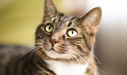 Behaviour Disorders in Cats: What do they mean?