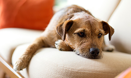 Behaviour Disorders in Dogs: What do they mean?