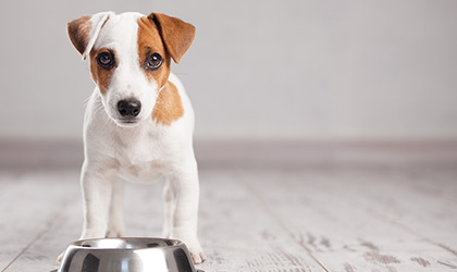 Diet Tips For Dogs