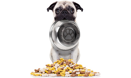 The Growing Problem of Pet Obesity: Why is it so serious?