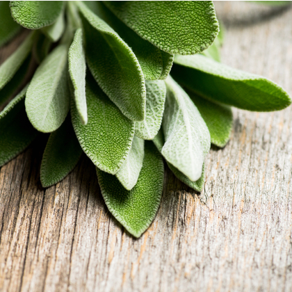 How sage can help with night sweats and hot flushes