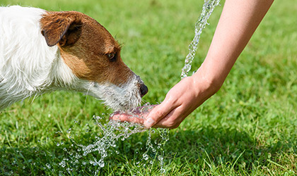 All About Aqua: Keeping your pets hydrated