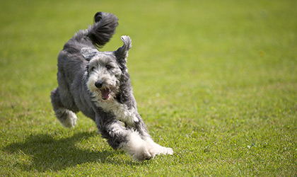 How Much Exercise Does My Pet Need?