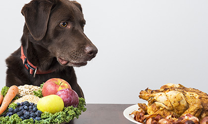 Vegetarian, Vegan or Raw? Detangling Pet Diets